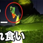 釣り初心者でも簡単【カマス釣り方】