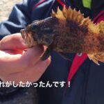 [小学生] 師崎堤防 ダイソータックルで何が釣れるのか?!検証![師崎堤防釣り]