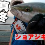 真冬の大阪湾で青物釣り!ショアジギングでメジロが釣れた!