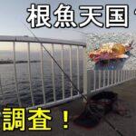 【大津港新堤防】釣り場で出会った釣り人さんにおすすめされた、神奈川県横須賀市のメバルやカサゴなどの根魚がよく釣れる堤防で釣りしてみたら…【2019.12.20】
