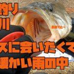 【バス釣り 琵琶湖 瀬田川】2021初バスに会いたくて、春の暖かい雨の中いざ出陣!!モラモラやダウズスイマーやTN80を投げていく!!春のバス釣りを考えてみる。