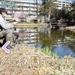 桜咲く横浜の小さな公園で小物釣り。【淡水】
