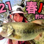 【釣りガール】春のバス釣りは岸際でもデカバスが釣れる!相模湖