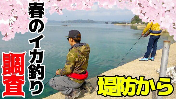 春イカを求めて堤防から狙ってみた!!