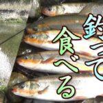 ウグイ釣って食べる!尺バヤ大漁!塩焼きうまいぞ!ミャク釣り。 ウグイの瀬付き。ウグイの大群。爆釣。 小物釣り62。 琵琶湖 Lake BIWA River Fishing