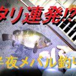 大型メバル連発!日本最強の海釣り公園でメバル狙いの結果【釣り動画】