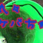 fishingmax武庫川店  鳴尾浜海釣り公園
