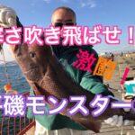 fishingmax垂水店12/16平磯海釣り公園・冬も熱~い釣果が!!