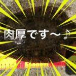 fishingmax垂水店5/20平磯海釣り公園でカレイ!