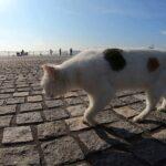 海釣り公園の野良猫のパトロールについていってみた
