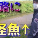 【宮城釣り】水路に怪魚が潜んでる!マジ凶悪!とんでもないニオイだ!