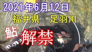 【鮎釣り】足羽川 解禁! 激渋の状況でまさかの大物に遭遇する!? 2021年6月12日