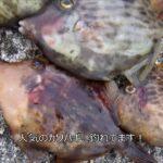 fishingmax 垂水店 10/14 平磯海釣り公園