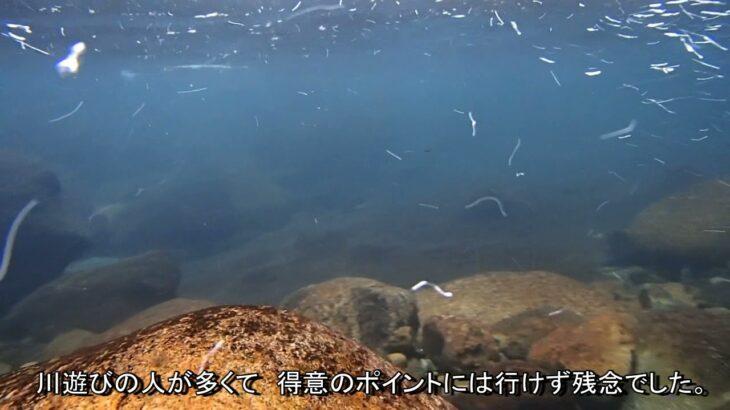 鮎釣り 天川 2021.7 25