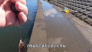 涸沼川のハゼ釣り(2021年7月25日)