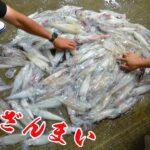 イカが無限に釣れる夢のような釣りで大量のイカが・・・!!