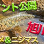 【激アツ】お気に入りの川で釣り三昧!アツかったのは釣りなのか?それとも気温だったのか?!