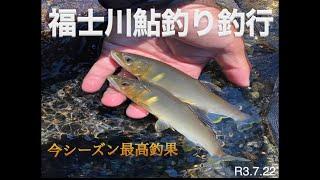 富士川水系福士川鮎釣り釣行
