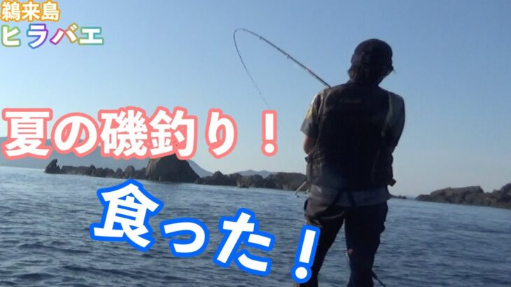 鵜来島で磯釣り!夏グレにルアーフィッシング!とにかく暑い!!
