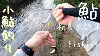 小鮎釣りを楽しむ。琵琶湖流入河川