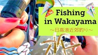 和歌山県釣り~日高港—堤防釣り~