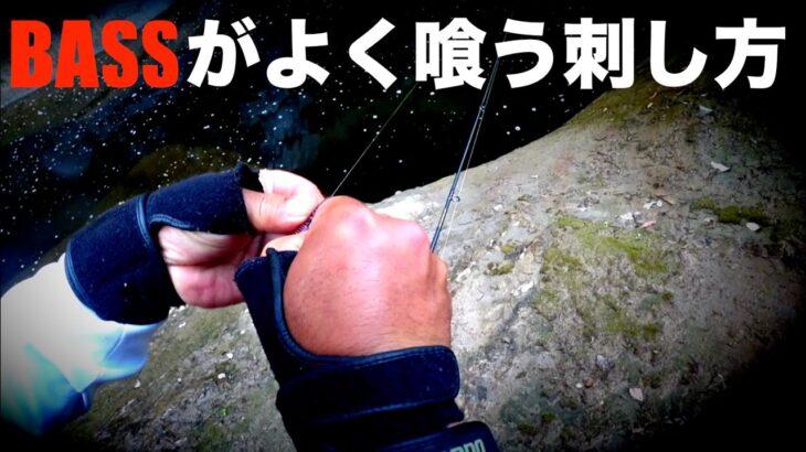 【バス釣り】へんてこなセッティングで狙うサイトフィッシングの肝
