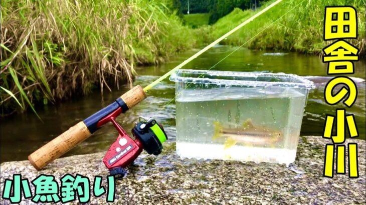 [川釣り] 田舎の小川でカワムツ釣り カワムツは初心者にもルアーで気軽に釣れます! 鱒レンジャー/小魚釣り