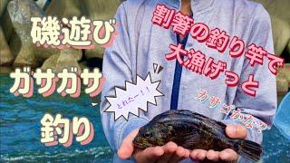 【磯遊び】ガサガサと釣りで高級魚げっと