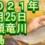 鮎釣り 九頭竜川 釣果 小澤剛 友釣り無双 2021年