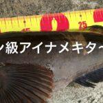 fishingmax垂水店4/01平磯海釣り公園