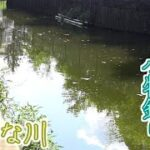 住宅街を流れる小さい川で小物釣りをしたらたくさん釣れた!【小物釣り】