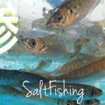 新敦賀港⚓サビキ釣り!鯵!