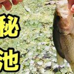 釣り仲間と楽しくブラックバス【ジャッカル】【シザーコーム】【ハイエースで行く】
