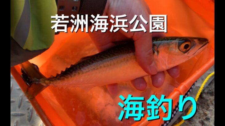 【若洲海浜公園】ダイソー1000円釣り竿セットで海釣り