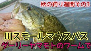 川スモールマウスバス ゲーリーヤマモト モコリークローで!秋の釣り週間その3