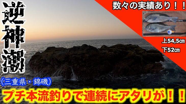 【三重県・錦磯】逆神潮だがプチ本流釣りで連続HIT!!(名礁・カツオ本島)