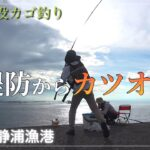 堤防からカツオ 静浦大堤防【遠投カゴ釣り】伊豆