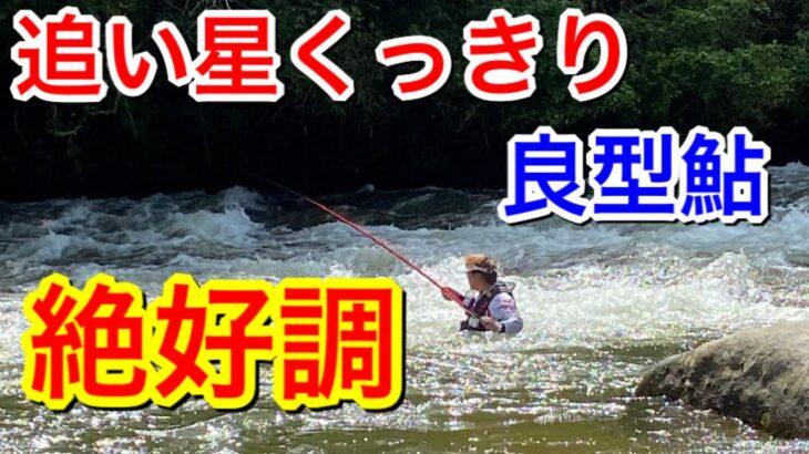 [まだまだ絶好調、良型鮎]鮎釣りも終盤戦だがまだまだいけます‼︎目指せ良型‼︎
