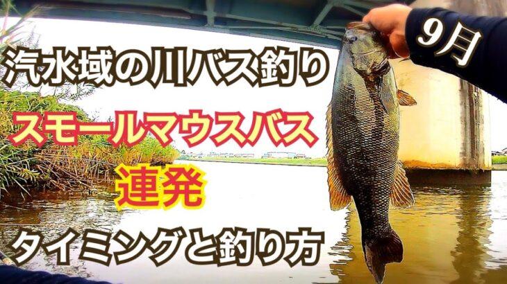 埼玉の川でスモール連発 スモールマウス バス釣り