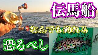 【吉川渡船】タイラバでとんでもない魚が釣れた【伝馬船】