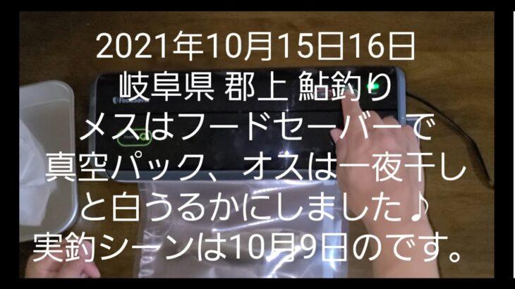 2021年10月15日16日 岐阜県 郡上 鮎釣り メスはフードーセーバーで真空パック、オスは一夜干しと白うるかにしました♪実釣シーンは10月9日のです。
