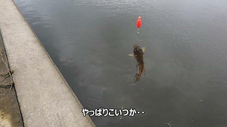涸沼川のハゼ釣り(マハゼ5匹、最長17センチ)(2021年10月16日)