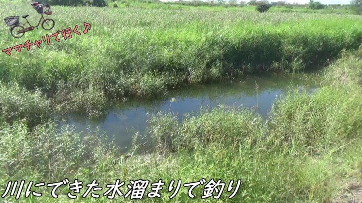 川の水溜まりで釣り