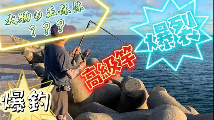 堤防上高級竿爆裂!!大物の正体は??その後爆釣り!!(ガーラモンスター)【重磯】