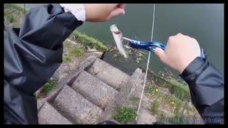 初めて釣れたブラックバス🎣