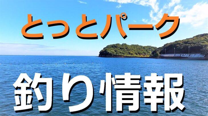 日本最強の海釣り公園とっとパーク!秋の釣りシーンと攻略情報
