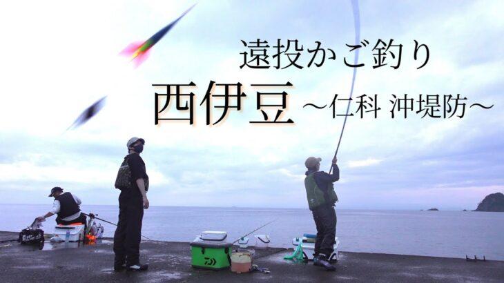 【レア魚!!】仁科の沖堤防へ【遠投カゴ釣り】西伊豆