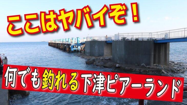 和歌山県下津ピアーランド釣り公園へ行ったでショウ