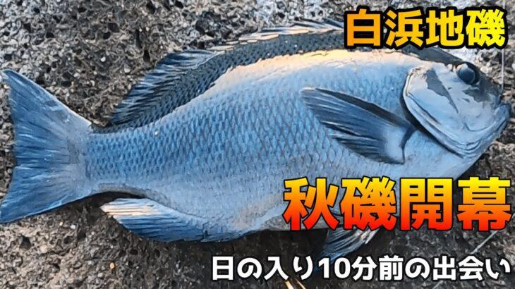 【白浜地磯】秋磯開幕~後編~グレ釣り!